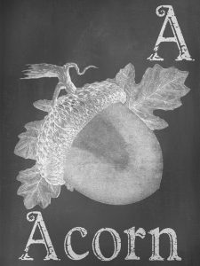 A-is-for-Acorn