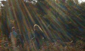 sunlit-ashdown-forest